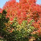Red Tree by Shulie1