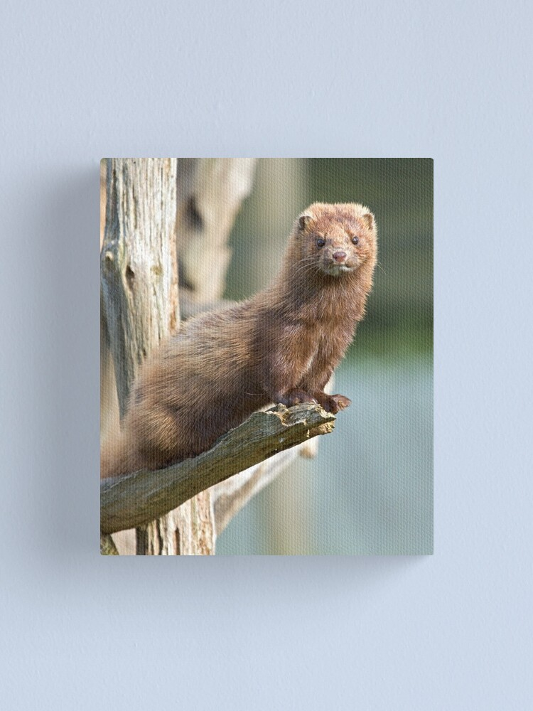 Alternate view of Mink sees all Canvas Print