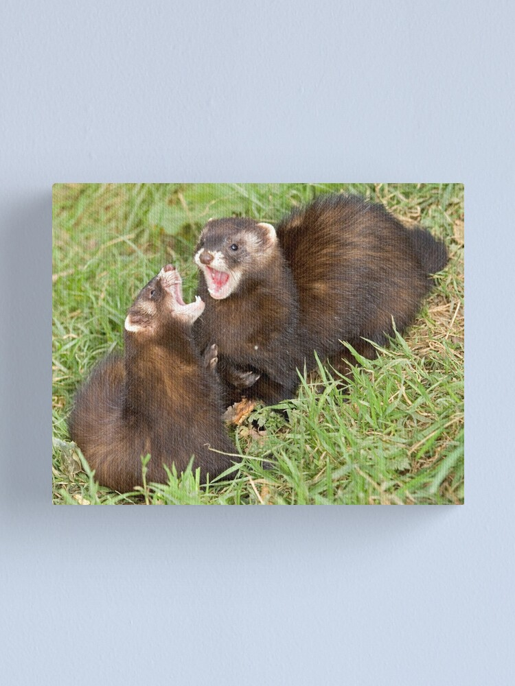 Alternate view of Duet in the key of polecat Canvas Print