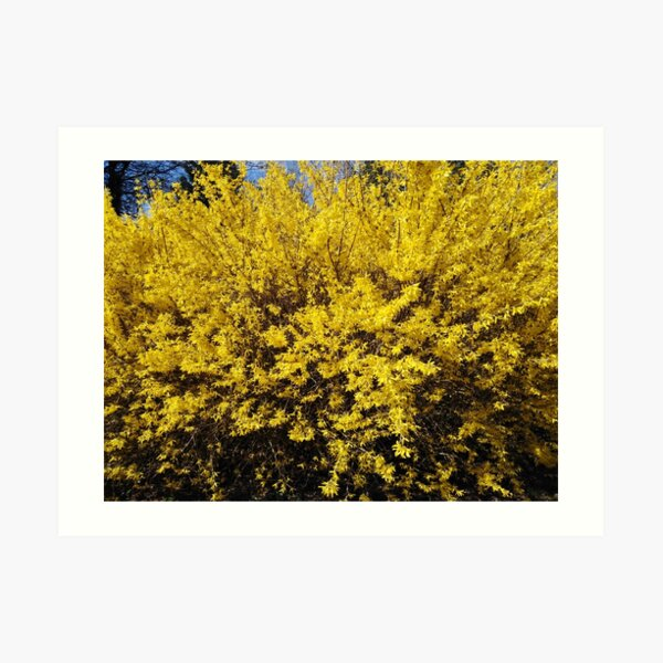 Yellow Bush Art Print