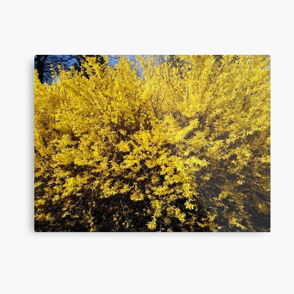 Yellow Bush Metal Print