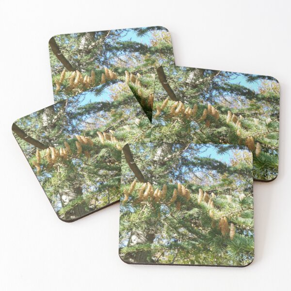 Parliament of Owls Tree  Coasters (Set of 4)