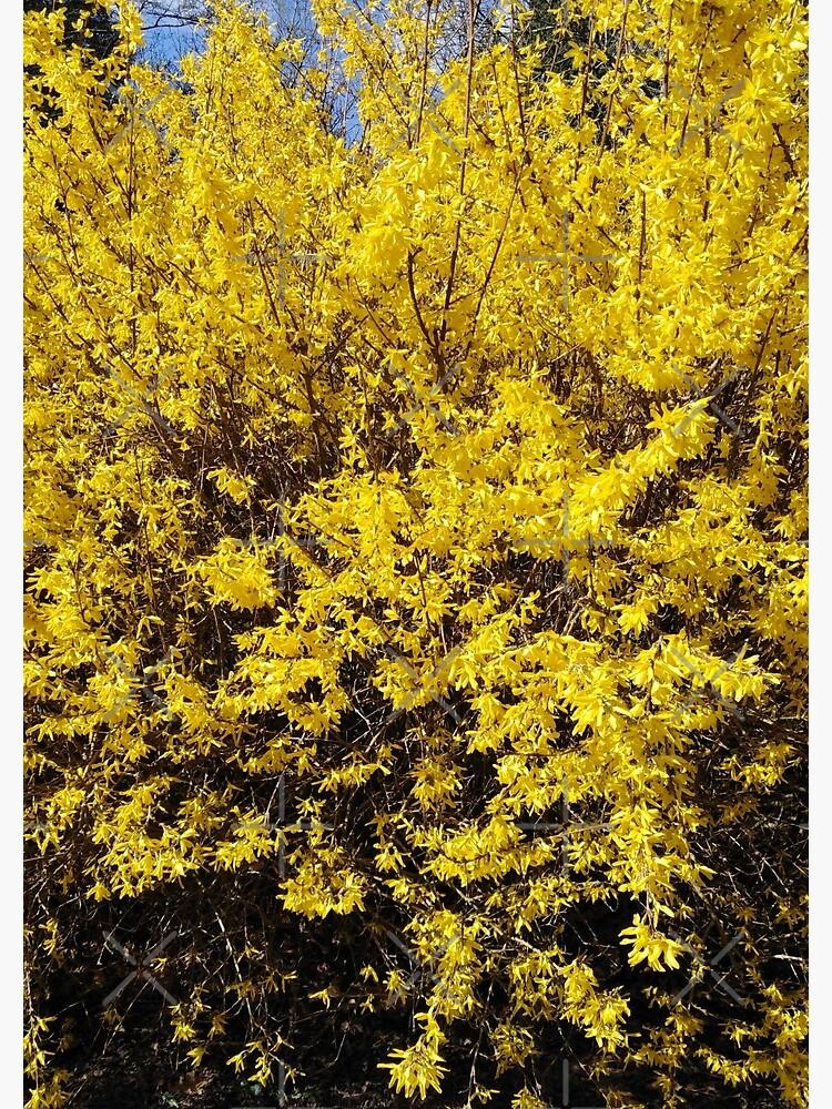 Yellow Bush by MikeHawkinWorld