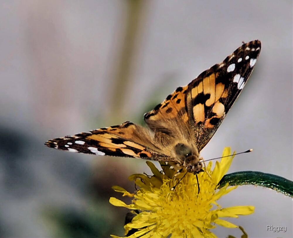 Flutterby by ShutterUp Photographics