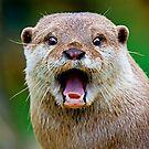 Otter by Stuart Robertson Reynolds