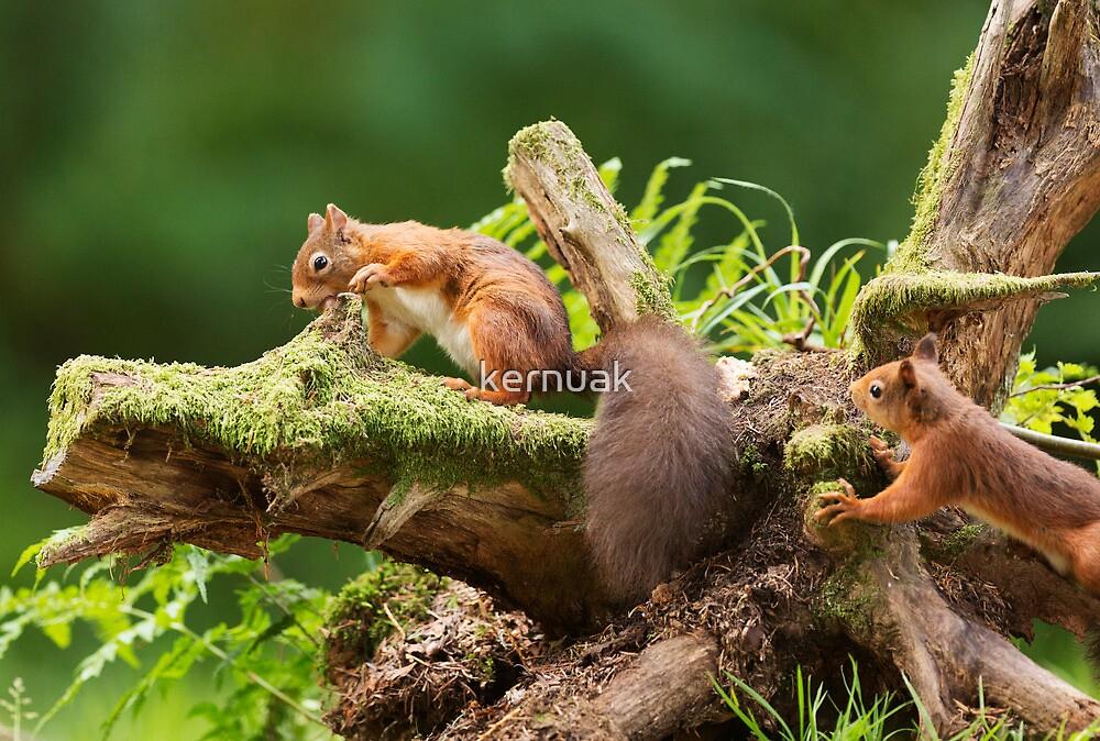 Red Squirrel Ambush by kernuak