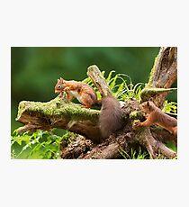 Red Squirrel Ambush Photographic Print