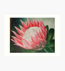 King Protea - South Africa Art Print