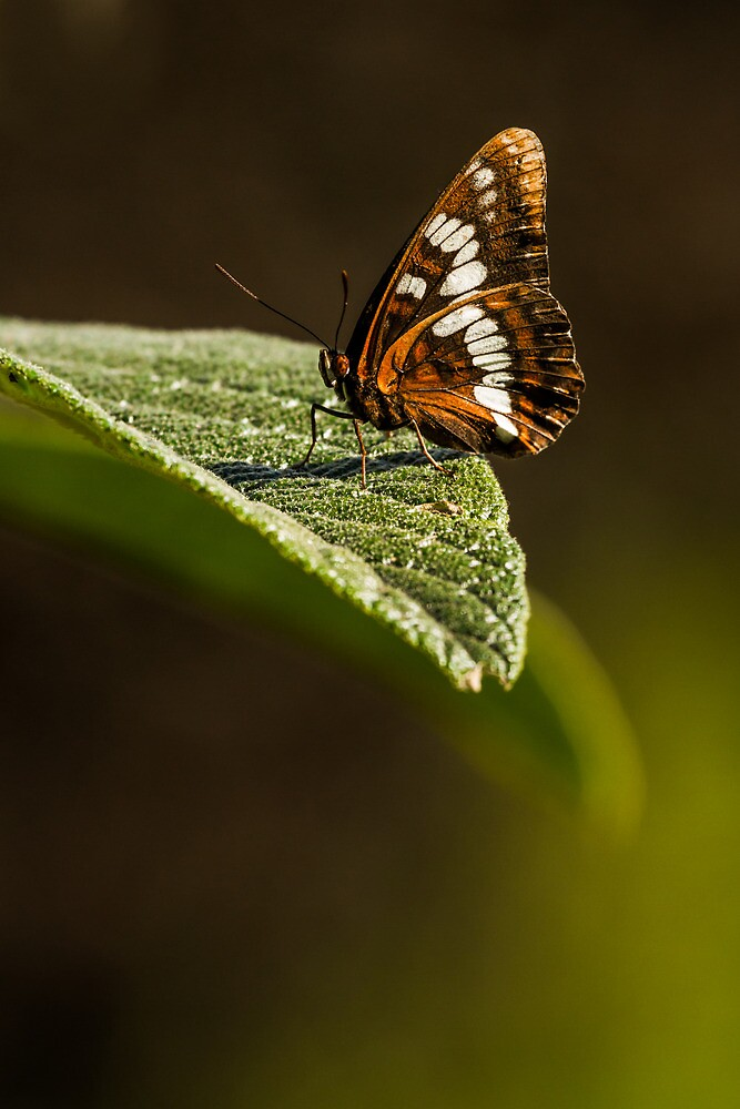 SOAKING IN THE SUN by Sandy Hill
