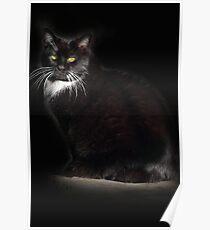 Tuxedo Cat Poster