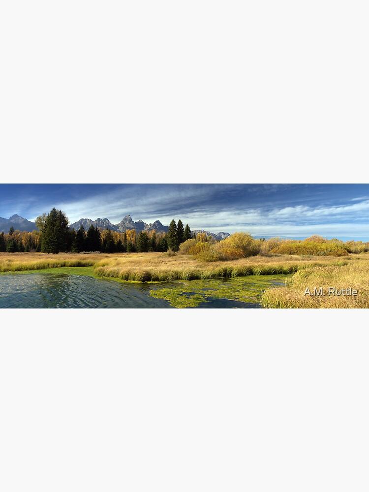 Golden Marsh Grasses, Teton Panorama by annruttle