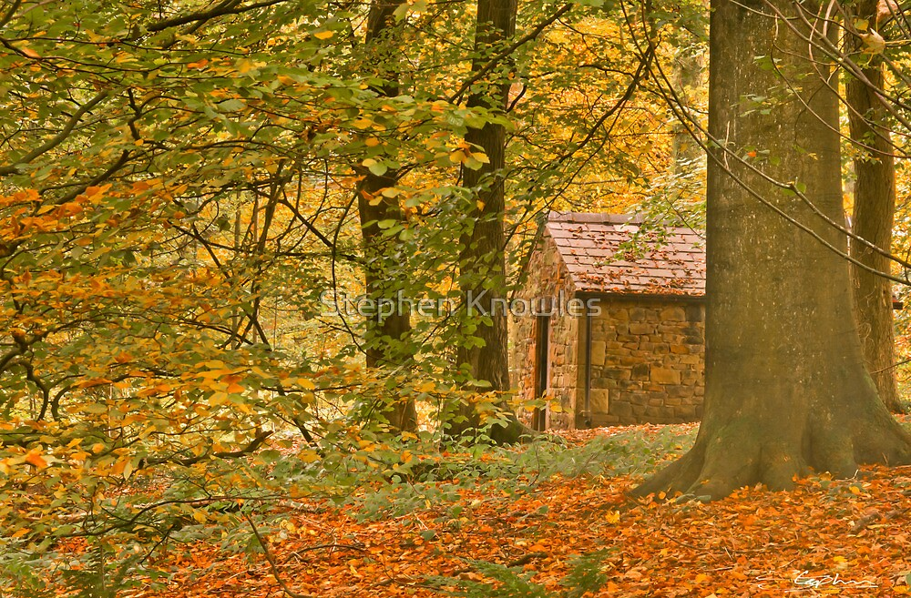 Cabin in the Woods by Stephen Knowles