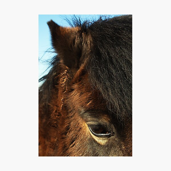 Horse details, eye, ear and all that texture!  Photographic Print