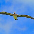 Pelican In The Clouds by Deborah  Benoit