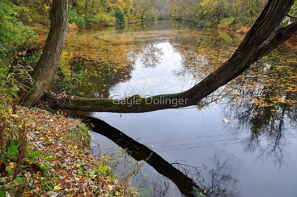 Calm Waters by Gayle Dolinger