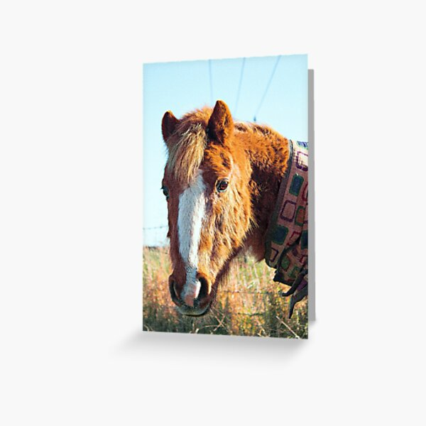 Horse with scarf country living  Greeting Card