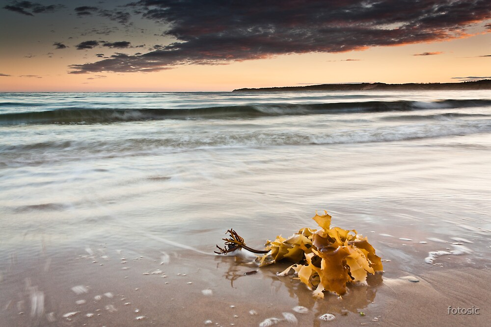 Washed ashore by fotosic