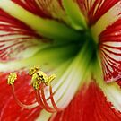 Lily up close by Joy Rensch