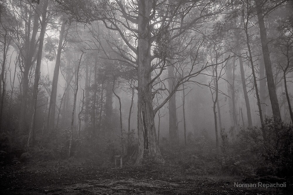Gather in the mist - Marysville by Norman Repacholi