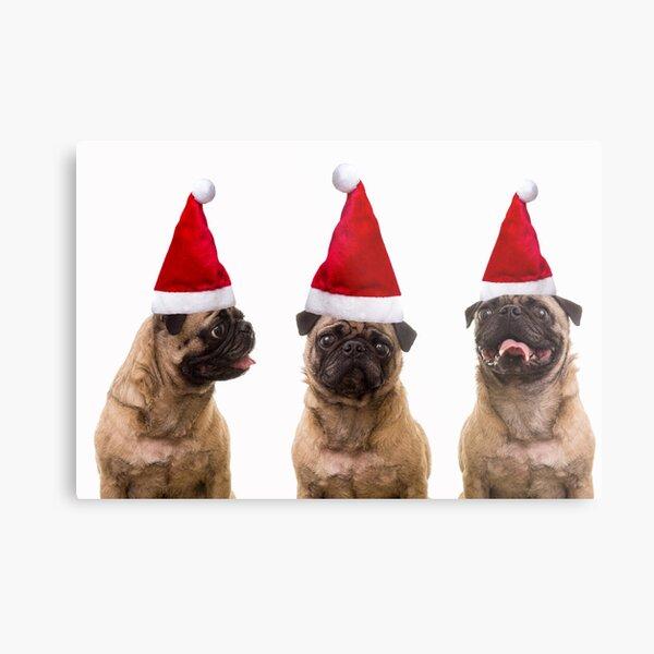Christmas Pugs Trio Metal Print