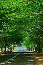 The Avenue by vilaro Images