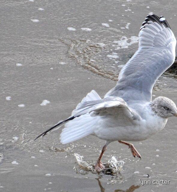 Walking On Water by lynn carter