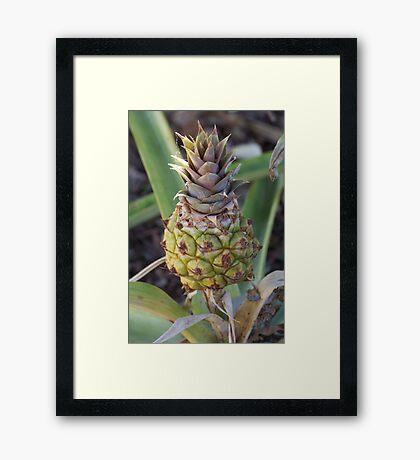 Baby Pineapple Framed Print