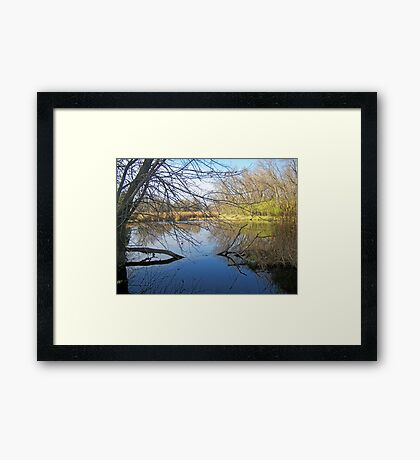 Cattail Marsh Framed Print