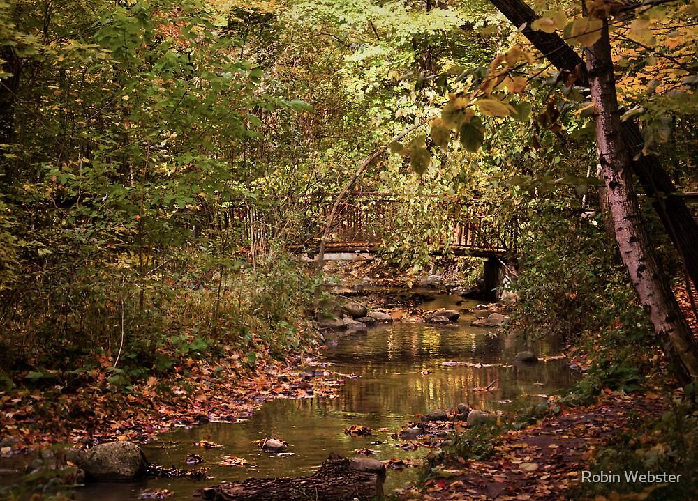 The Hidden Bridge by Robin Webster