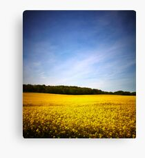 Rapeseed field with blue sky Canvas Print