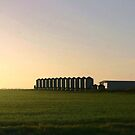 Wheat Silos by cjcphotography