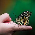 On my finger  by Andrea Rapisarda