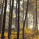 autumn morning by queenenigma