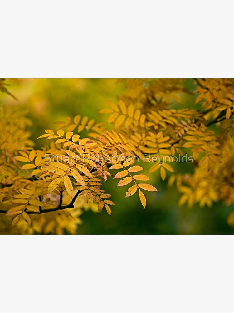 Gold and Green by Sparky2000