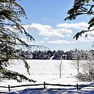 Winter wonder land by Penny Rinker