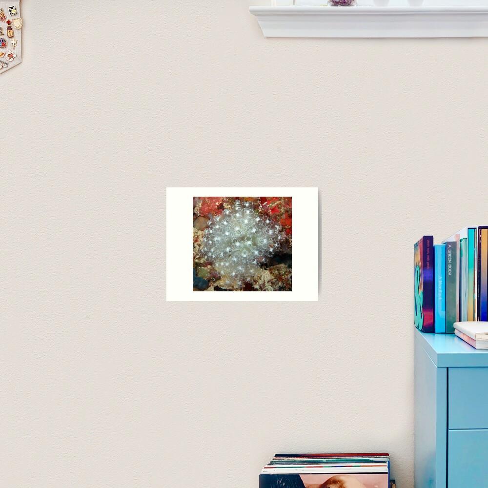 White Ascidians Art Print
