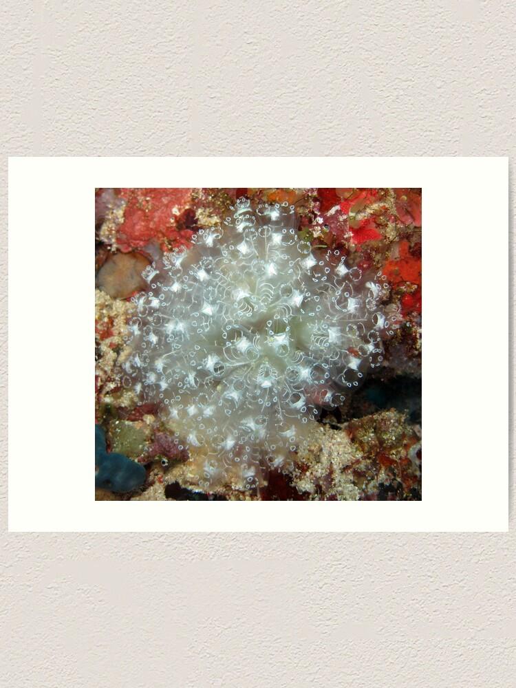 Alternate view of White Ascidians Art Print