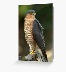 Sparrowhawk Greeting Card