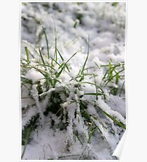 Snow and Grass Poster