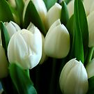 White Tulips by James Stevens