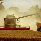 Harvest Time by James Stevens