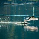 Touch-down by amrita125