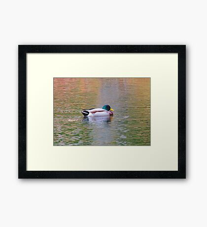 Reflecto Duck Framed Print