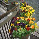 Stairway Flowers by © CK Caldwell IPA