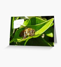 Bee Macro Greeting Card