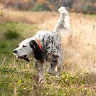 Hunting by Sandra Hobbs
