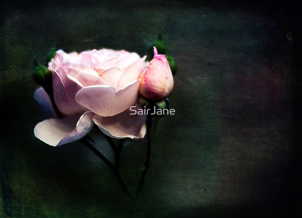 Bella Notte by SairJane