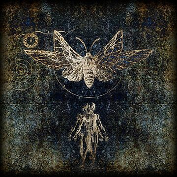 Vitruvian Moth by Winneganfake