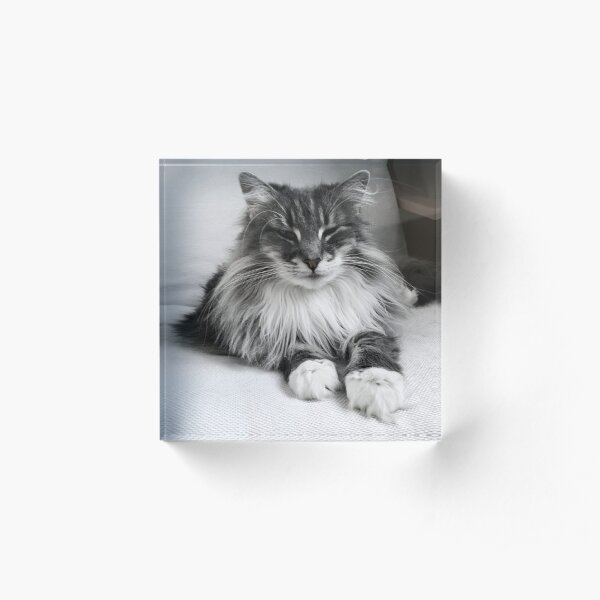 Pretty Cat Black and White Acrylic Block