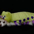 Cutiepillar by Heather Crough